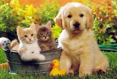 Hayvanlar Kategorisi